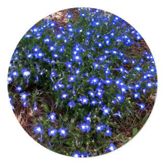 Lobelia Eyed azul do palácio Convites