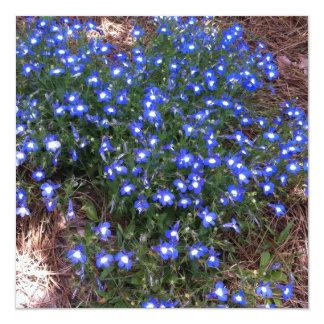 Lobelia Eyed azul do palácio Convite Quadrado 13.35 X 13.35cm