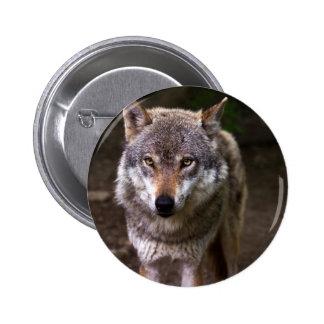 lobo bóton redondo 5.08cm