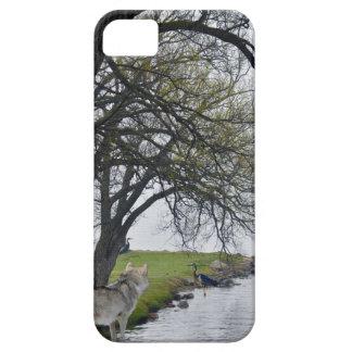 Lobo cinzento & garças-reais pelo caso do iPhone 5 Capas Para iPhone 5