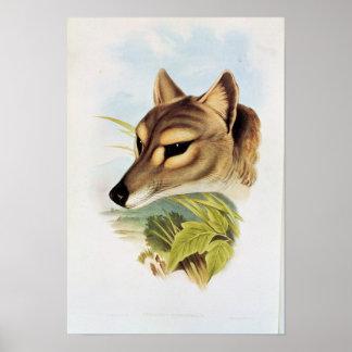 Lobo ou tigre tasmaniano pôsteres