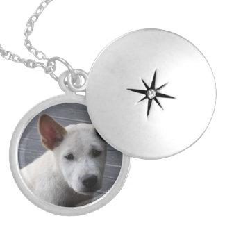 Locket memorável do animal de estimação - prata colar medalhão
