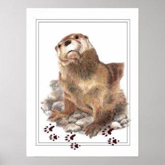 Lontra de rio bonito, trilhas animais, animais poster