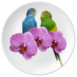 Louça Budgie com orquídea roxa