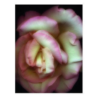 <Love is a Rose> por Nathan Griffith Cartão Postal