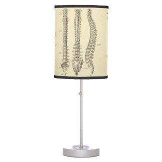 Luminária De Mesa Anatomia da coluna espinal e das vértebras