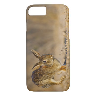 Lupulagem do coelho de coelho oriental capa iPhone 8/7