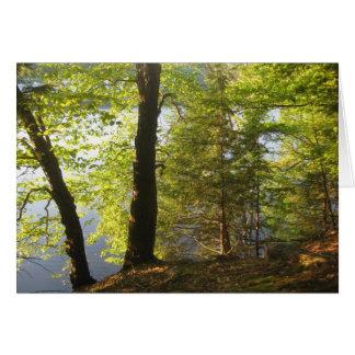 Luz solar em árvores cartão