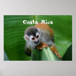 Macaco de esquilo Costa Rica Pôsteres
