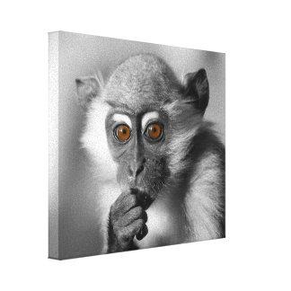 Macaco do Mangabey do bebê