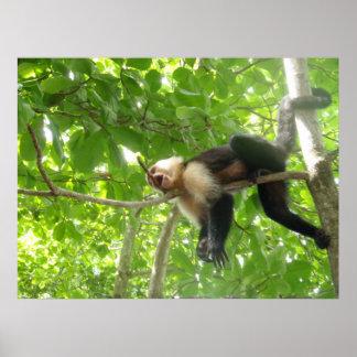 Macaco engraçado do Capuchin em uma árvore Poster