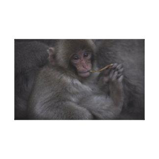 Macaque do bebê - Macaco Bebe