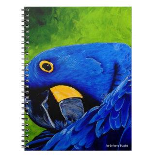 Macaw azul caderno espiral