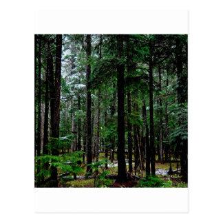 Madeiras Piney da árvore Cartão Postal