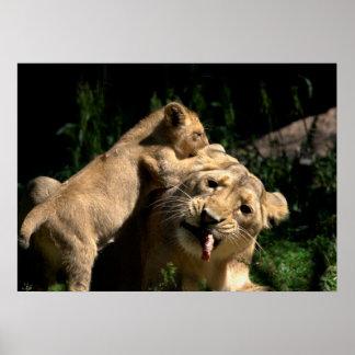 Mãe do leão e um bebê pôster