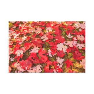 mágica cromática do outono em canvas