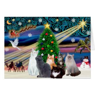 Mágica de Chrstmas - seis gatos (variedade) Cartão