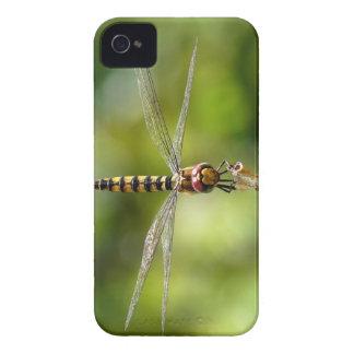 Maior libélula carmesim do planador
