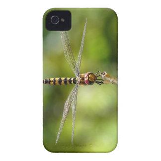 Maior libélula carmesim do planador capas de iPhone 4 Case-Mate