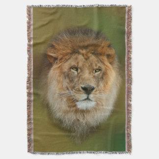 Manta Fim majestoso do leão de África do Sul acima