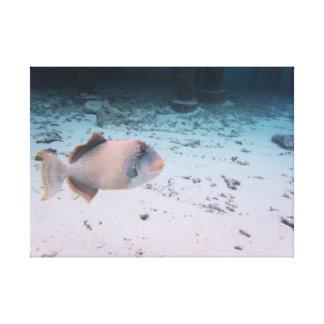 Mar coral tropical de turquesa dos peixes de