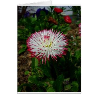 Margarida cor-de-rosa bonito pequena cartoes