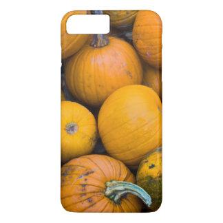 Massachusetts, Salisbúria, abóboras, outono Capa iPhone 7 Plus