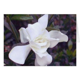 Matizes do Gardenia Cartão