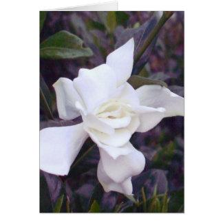 Matizes do Gardenia Cartao