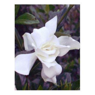 Matizes do Gardenia Cartão Postal