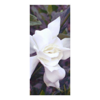 Matizes do Gardenia Modelo De Panfleto Informativo
