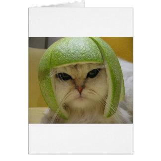 Mercadoria engraçada do gato cartoes