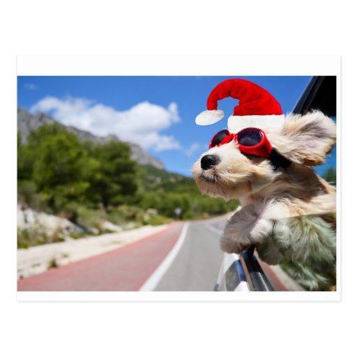 Merry Christmas dog Cartões Postais