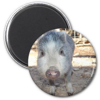 Mini porco bonito ímã redondo 5.08cm