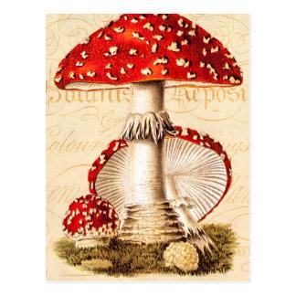 Modelo dos cogumelos do vermelho do cogumelo dos cartão postal