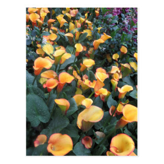 MODELO: Joaninha G ORIGINAL da flor do jardim da Cartão Postal