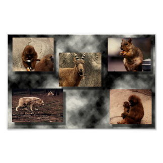Montagem animal poster
