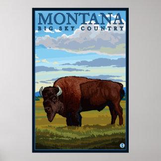 Montana - bisonte pôster