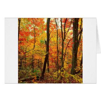 Montanhas apalaches carmesins da floresta cartão