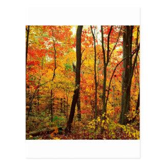Montanhas apalaches carmesins da floresta cartoes postais