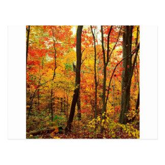 Montanhas apalaches carmesins da floresta cartão postal