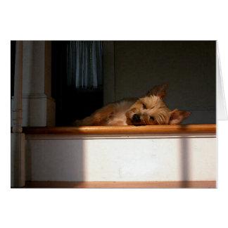 Monte de pedras Terrier no cartão vazio de The Sun