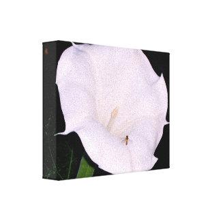 Moonflower & fotografia do amigo impressão em tela canvas