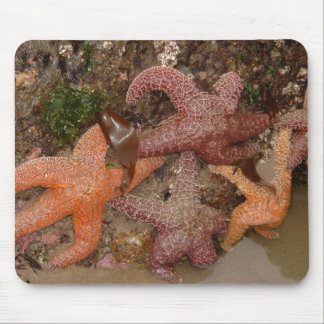 Mousepad A estrela do mar/estrelas de mar no canhão
