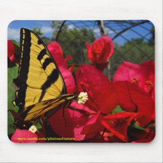 Mousepad - Butterlfly que sugam em uma flor