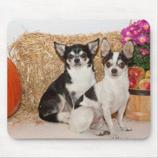 Mousepad Chihuahua na queda