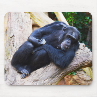 Mousepad Chimpanzé