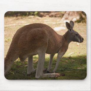 presentes rato canguru zazzle pt