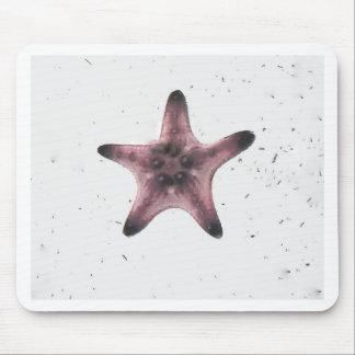 Mousepad Estrela do mar no teste padrão branco do