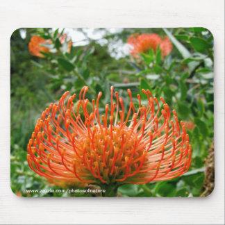 Mousepad - flor de coxim do pino do Protea